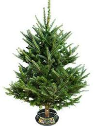 majestic fraser fir artificial christmas tree trees christmas