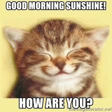 Good Morning Sunshine Meme - good morning sunshine how are you very happy cat meme generator