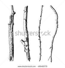 hand drawn wood twig set ink stock vector 499469779 shutterstock