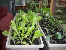 indoor winter gardening ideas indoor vegetable gardening in