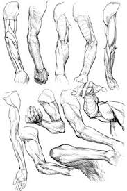 pin by shauday smith on anatomy reference pinterest pies