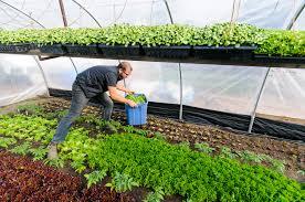 urban farmers can earn 75 000 on 15 000 square feet civil eats