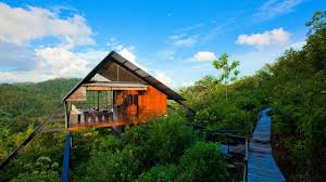 Top 10 Famous Tree House in Sri Lanka  Tree Houses Resort in Sri Lanka