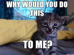 Sad Kitten Meme - purrmanently sad cat is back aww