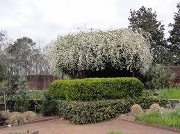 riverbanks botanical garden gogardennow