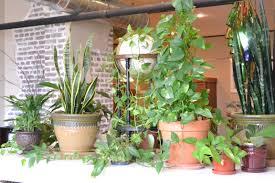 interior interesting patio design with pothos plant