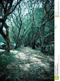cool trees cool tone trees stock photo image of look foliage green 4112792