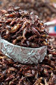 eating bugs bug recipes and insect recipes from chefs time
