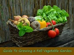 Fall Vegetable Garden Plants by 10 Easy To Grow Fruit U0026 Vegetable Plants For Small Gardens