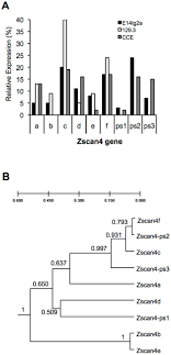 Serum Cce expression patterns of zscan4 gene paralogues in mouse esc lines