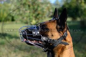 belgian shepherd how much get belgian malinois wire muzzle