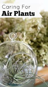 85 best garden air plants images on pinterest indoor plants