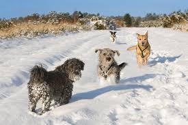 natalie kinnear photography dogs trust 2012 corporate christmas