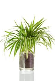 Tropical Foliage House Plants
