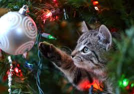 cat christmas are christmas trees safe for cats petcha