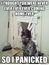 Welcome Home Meme - things your pets do while you re away dog animal and dog funnies