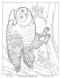 desert owl coloring page animal habitat coloring pages desert scene coloring pages printable