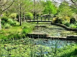 Clark Botanical Gardens Swan Picture Of Clark Gardens Botanical Park Weatherford