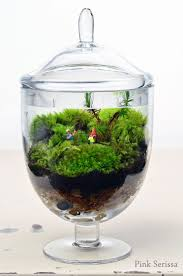 165 best terrariums images on pinterest gardening plants and home