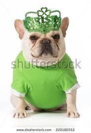 dog st patricks day stock images royalty free images u0026 vectors