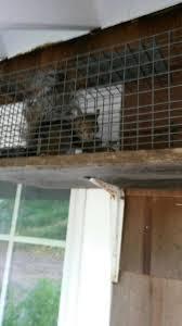 cape animal solutions u2014 problem animal pest removal