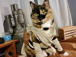 star wars costumes these pets in star wars costumes are ready for halloween