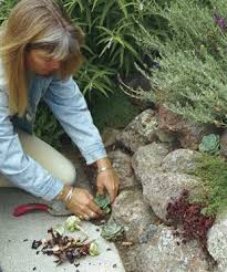 ideas planted pockets give life to stone walls fill cracks and