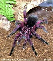 tarantula spiders spider insects and animal