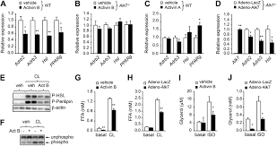 adipocyte alk7 links nutrient overload to catecholamine resistance