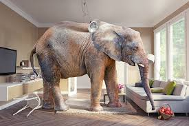 elephant in the living room chatsworth consulting group how to handle the elephant in the