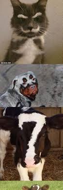 Benson Dog Meme - alternative to the cone of shame pets pinterest dog doggies