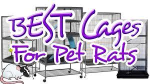 Cheap Rat Cage Excellent Cages For Pet Rats All About Rat Cages Episode 3