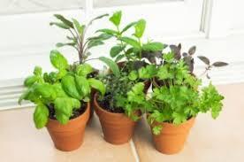 window herb gardens indoor herb gardens how to grow a window herb garden