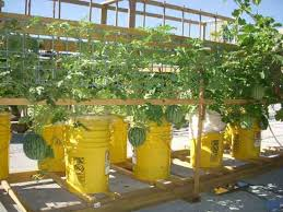 build a self watering container do it yourself mother earth news