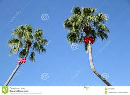 what a way to decorate palm trees for for the
