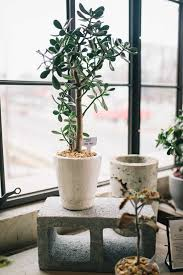 best house plants the best indoor plants you can keep alive my style vita