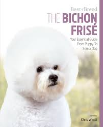 bichon frise training the bichon frise your essential guide from puppy to senior dog