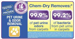 Upholstery San Fernando Valley Delta Chem Dry San Fernando Valley Carpet Cleaning In Northridge Ca