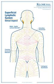 Human Body Anatomy Pics 220 Best Anatomy For Massage Therapists Images On Pinterest