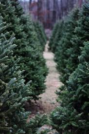 485 best winter wonderland images on pinterest christmas time