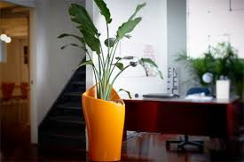 indoor plants nz www ambius co nz static i officeplants officeplant