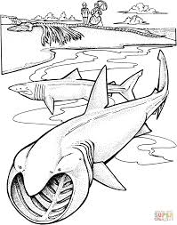 two basking sharks coloring page free printable coloring pages