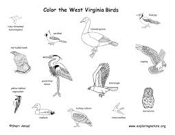 West Virginia birds images West virginia habitats mammals birds amphibians reptiles jpg