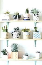best plants for bedroom money plant in bedroom best money plant ideas on plants indoor