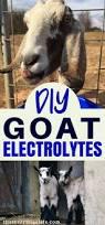 Goat Home Decor Best 25 Pygmy Goat House Ideas On Pinterest Goat House Goat
