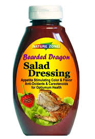 Bearded Dragon Behavior Before Shedding by 145 Best Bearded Dragon Images On Pinterest Amphibians Reptiles