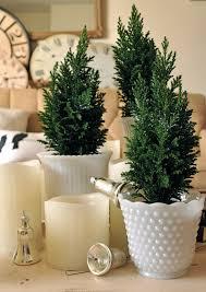 mini merriness with mini trees jennifer rizzo