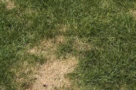 Common Plant Diseases - garden problems