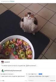 Cat Memes Tumblr - tumblr tumbles into russian fat cats ha ha pinterest fat