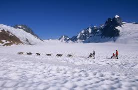 juneau day tour dogsledding mendenhall glacier helicopter tour